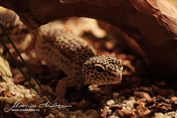 reptile 05