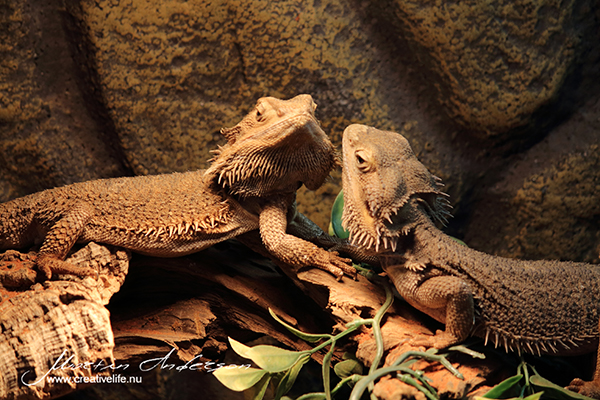 reptile 07