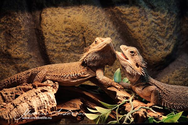 reptile 09