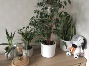 8 Växter du borde ha i ditt sovrum